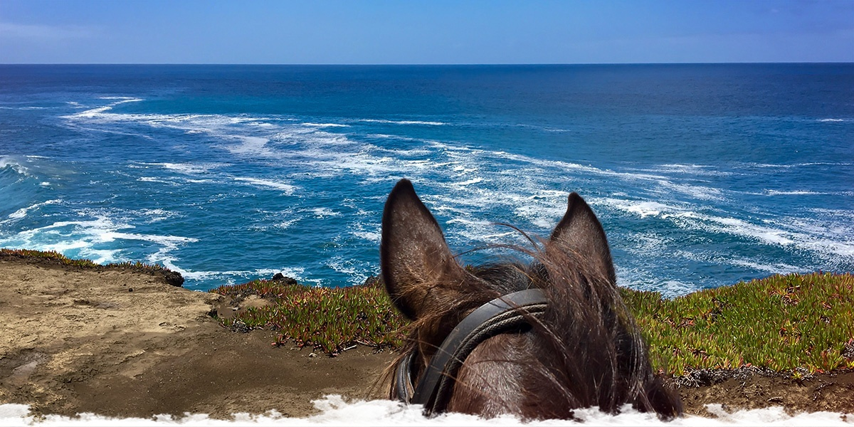 Horse Riding Trail on the Blue Island