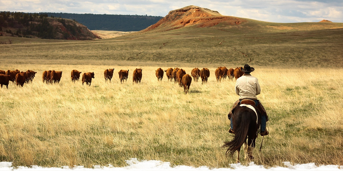 Choosing the right ranch holiday: Guest ranch or working ranch?