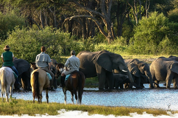 Hwange horseback safari: the Elephant ride.