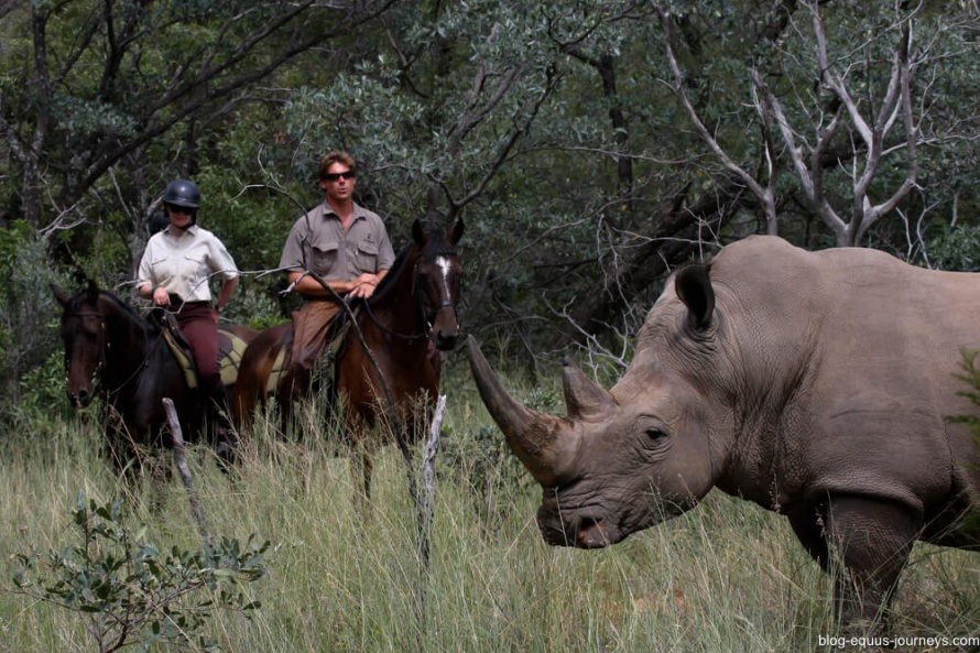 Spotting a white rhino on horsback at Ant's Lodge @EquusJourneysBlog