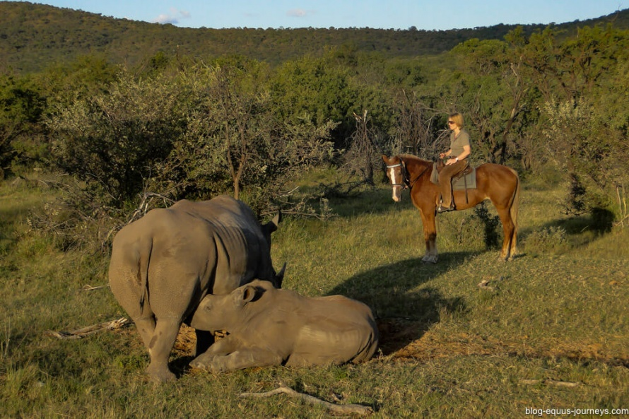 Catching a glimpse of a baby rhino from the saddle @BlogEquusJourneys