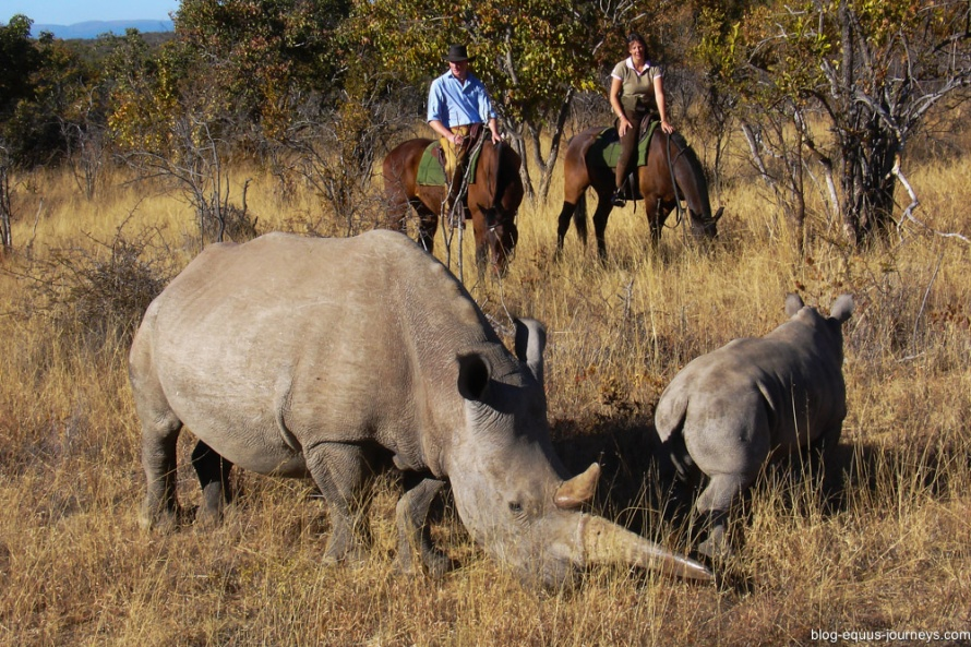 Rhinos from  Ant's Lodge @BlogEquusJourneys