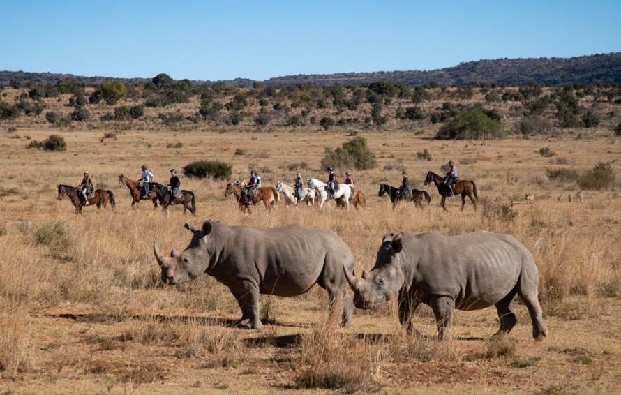 Riding amongst wild rhinos in South Africa @Worldwidehoofprints