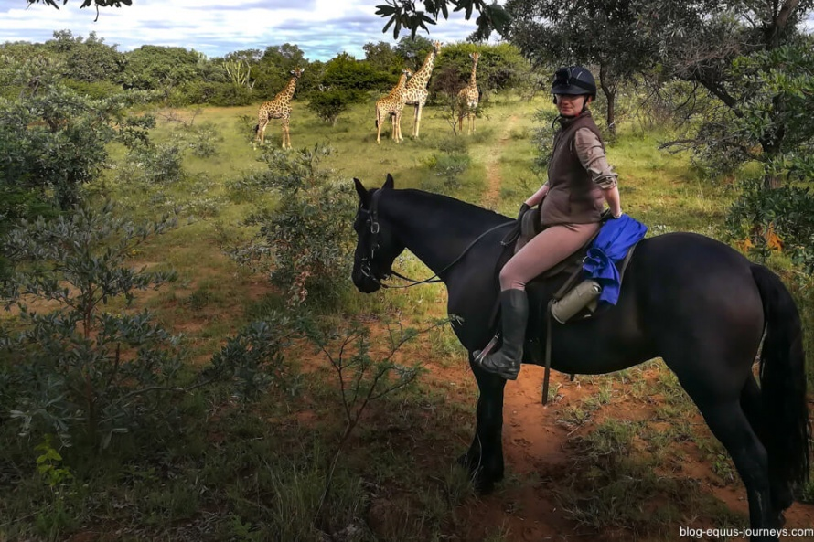 Iris in the saddle getting close to the wildlife @EquusBl