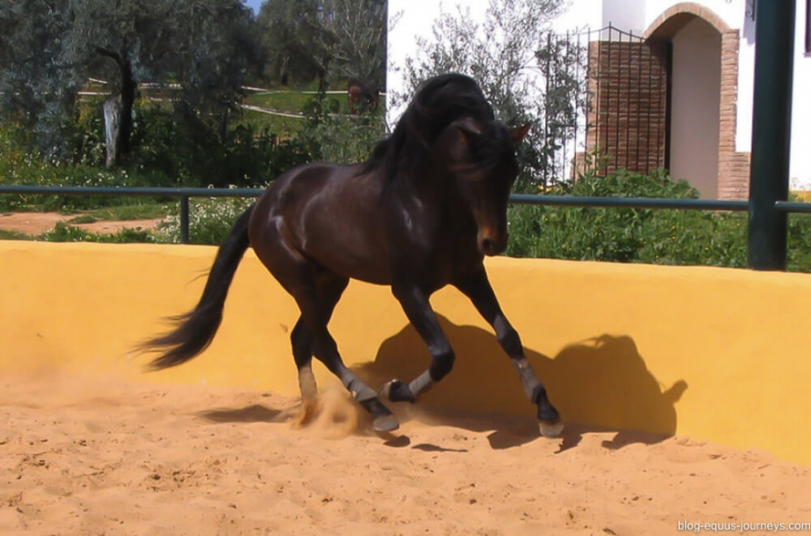 Examplary horses trained for Dressage @BlogEquusJourneys