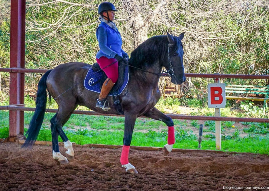 Lesley and the beautiful Pure Bred Spanish horse Albeitar @BlogEquusJourneys