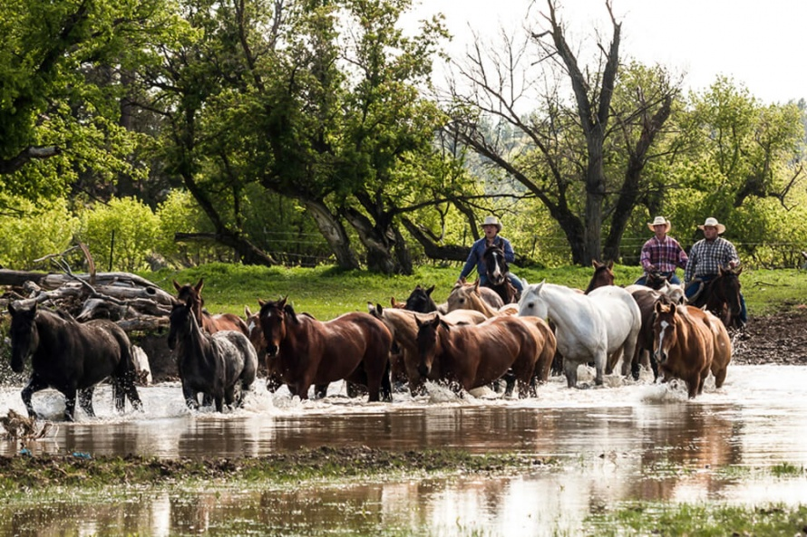 Rounding up horses at Kara Creek Ranch, Wyoming @WorldwideHoofprints