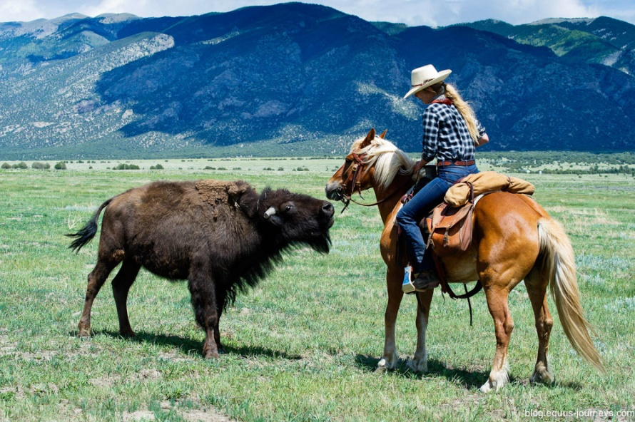 Riding with bison at Zapata Ranch, Colorado